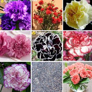 16 Renkler Mevcut Karanfil Tohumları Balkon Saksı Avlu Bahçe Bitkileri Tohum Dianthus Caryophyllus Çiçek Tohum bir Paket 200 Adet
