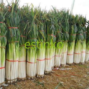 Shangdong Zhangqiu Géant Chinois Vert Oignon Graines Semences de Légumes Maison Jardin Bonsaï Plantes Chinois Légumes Graine Livraison Gratuite