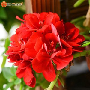 Um Pacote de 20 Peças Univalve Vermelho Geranium Sementes Sementes de Flores Perenes Pelargonium Peltatum Sementes para Quartos Interiores