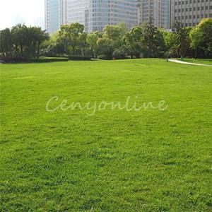 1000 adet Uzun Boylu Çayır Yeşil Çim Tohumu Festuca Arundinacea Çim Tohumları Z79