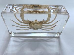 LIVRAISON GRATUITE yqtdmy crabe à main dans l'éducation de bloc de mode spécimen