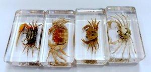 Livraison gratuite Yqtdmy 4 Pcs Vintage Mixed Design Crab Spécimen Insecte Effacer Spécimen