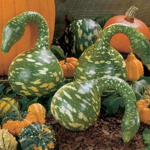 Bonsai plant GOURD - SPECKLED SWAN UNUSUAL garden decoration plant 10pcs E22