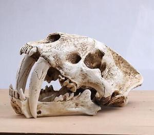 Realistico Saber Tooth Cat Tiger Skull Sabertooth Smilodon Fatalis Modello White