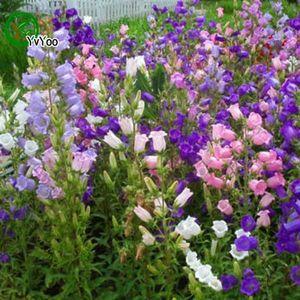 Multi color opcional Campanula semillas de flores Semillas de flores Bonsai Plant para Home Garden 100 partículas / lote T017