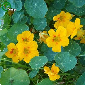 Graines de Tropaeolum majus jaunes Graines de fleurs de Bonsaï Plantes en pot Fleurs 10 Particules / sac p003