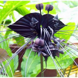 100 piezas de semillas de flores de orquídeas de tigre negro semillas de orquídeas de flores raras para plantas de jardín en casa bonsai