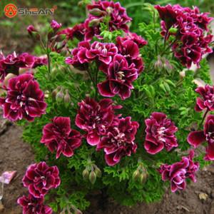 Crimson Blütenblätter Geranium Seeds Pelargonium Blumen für Zimmer Garten 20 Partikel / lot