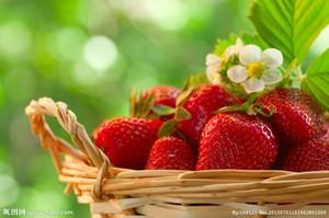 Bonsai Obst Riesen Erdbeeresamen Obst Bio-Heirloom Gartendekoration Pflanze 20pcs A66