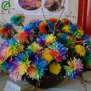 Venta caliente Arco iris Crisantemo semillas Hermosas semillas de flores Indoor Bonsai Plant 200 partículas / lote R003