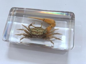LIVRAISON GRATUITE yqtdmy Vintage Fashion Spécimen Crab Jewelry YQT701