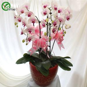 Hermosa polilla orquídea semillas hermosa flor planta casa jardín flor planta 30 pcs u012