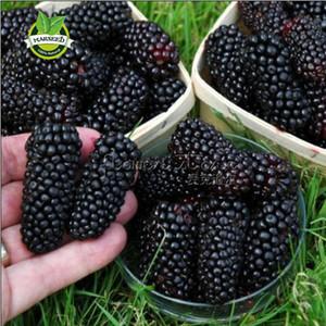 Große Promotion 100 Thornless Blackberry Seeds, lecker, nahrhaft, süß, natürlicher Snack, Staudengarten oder Topffrucht