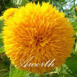 Ayçiçeği 50 Adet Çiçek Tohumları / Çanta Çift Blooms Tohumları Popüler Kesim Çiçek Yard Bahçe Konteyner Bitki büyümeye kolay