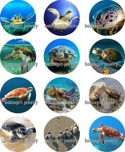 Envío libre de la tortuga de mar de cristal botón a presión de la joyería Charm Popper para la joyería de broche de presión de buena calidad 12 unids / lote Gl349 joyería que hace DIY
