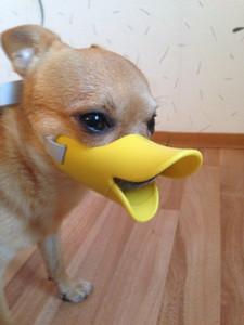 marchio D22 nuova variopinta del cane del silicone regolabile Muso Prevenire cane che abbaia il formato S per cani di piccola taglia