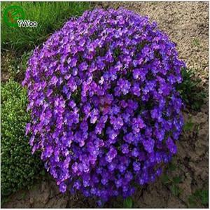 Arabis Rosea Seeds Arabis Wall Rock Cress Semi rosa Decorazione da giardino Fiore 50pcs M14