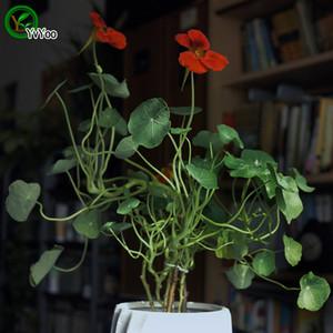 Tropaeolum majus graines Promotion Balcon Bonsaï Graines De Fleurs Plantes À Fleurs 10 pcs p004