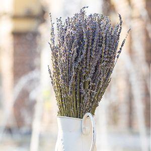 Nueva natural al por mayor de flores secas Reino Unido Lavanda flores secas para el partido de la boda decoración del hogar verdaderas artificiales flor