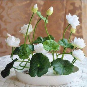 Multicolor sementes de lótus plantas hidropônicas flores aquáticas mini lírio de água jardim decoração planta 10 pcs F124