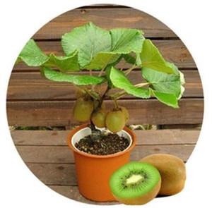 Usine de bonsaï Graines d'arbres de Kiwi Plante de décoration de jardin de fruits 20pcs A93