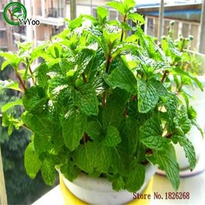 Semillas de menta verde Macetas Jardineras Jardín Bonsai Semilla de césped 30 partículas / lote H019