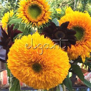 Ayçiçeği Çiçek 50 Tohumları için Çift Blooms Kolay-büyüyen DIY Ev Bahçe Çiçekli Bitki Bonsai veya Zemin