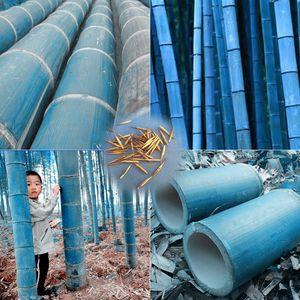 40 pz / borsa rari semi di bambù blu, giardino decorativo, piantatrice di erbe albero di bambu semi per giardino fai da te casa inviare regalo