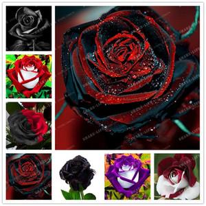 100 UNIDS Rare Rose Seeds Negro Rose Flor Con Borde Rojo Rare Rose Flores Semillas Para Jardín Bonsai Plantación planta de jardín en casa