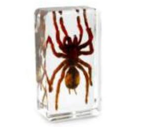 Espécimen de araña de Muti-color Resina acrílica Insecto Educación integrada Juguetes educativos Pisapapeles Ratón transparente Nuevos niños Biología Ciencia Kits