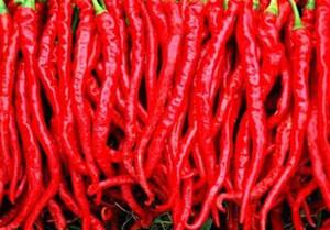 Les graines de piment rouge les plus chaudes du monde 100PC. Graines de légumes biologiques