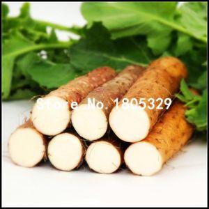 One Pack Chinese Yam Seeds 10 Pz Piante perenni Dioscorea Opposita Semi di ortaggi a base di erbe rare Plantas Medicinais bonsai
