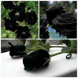 120 PZ Rare Black Rose Flowers Rare Incredibilmente bella Black Rose Seeds un fiore da giardino popolare