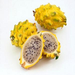 100 PCS Rare Jaune Pitaya Fruit Arbres Graines Plantes Vivaces Non-gmo Hylocereus Dragon Fruit Graines Home Garden