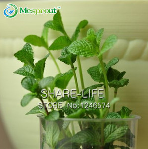100PCS Plant Mint Green Vegetable Seeds Balcony Potted Peppermint Seeds Aromatic Plant Seeds