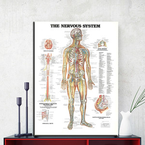ZZ1853 o sistema nervoso imprimir pintura da lona Anatomia Médica arte da parede Imagem Sala de estar Decoração de Casa Impressão giclée