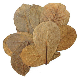 300pcs Nature Terminalia Catappa Foetida Almond Leaves Water Filter Aquarium Fish Tank Breeding Shrimp Snails Catfish Ornament