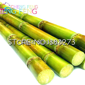 100 Adet Tatlı Doğal Şeker Kamışı Bitki Tohumları Saccharum Officinarum Bitki Tohumları Nadir Meyve Tohumları Ev * Meyve Bambu Gigante