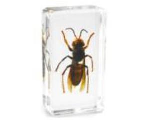 Biología minas abeja muestras resina de acrílico Embedded real Insectos pisapapeles transparente ratón Bloque Kid nueva ciencia LearningEducation Juguetes