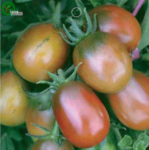 Domates Tohumları Yeni Varış Bonsai Organik Sebze Tohumları Ev Bahçe için 20 parçacıklar / çanta r016