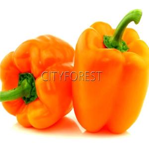 Orange Bell Pepper Vegetable 20 Graines Sweet Pepper Seeds Facile à cultiver 100% Real DIY Home Garden Légumes pour Salade Great Taste