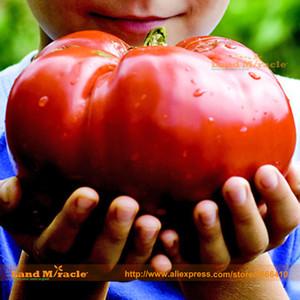 Mater Sandwich Hybrid Seed pomodoro biologico, 100 semi / Pack, Rare Love Apple Frutta sementi di ortaggi sementi non OGM Seed-Land Miracle