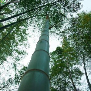 100 unids / bolsa Gigante Moso Bamboo Seeds Moso Bamboo Tree Semillas Home Garden Courtyard Bamboo Seed