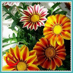 الأرض تظهر ربيع جميل 20 بذور زهرة غزانيا Nice Mix Fresh Beautiful Garden A029