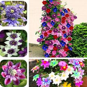 Wholesale300 Bonsai Clematis Birnen Draht Lotus Pflanzensamen Multicolor Clematisbonsai Pflanzengarten