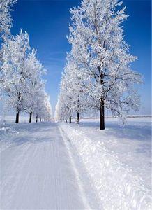 Солнечного Blue Sky Winter Scenic Фотография фоны Снег дорога Белые дерева Открытого фото Shoot фон для студии
