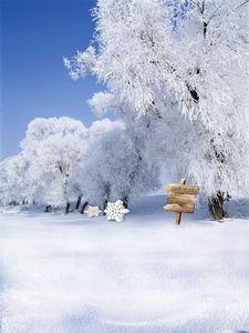 Ciel bleu hiver scénique photographie décors belle neige blanche arbres couverts enfants famille vacances photo shoot fond de studio