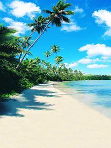 Vacaciones de verano Playa Fotografía de bodas Fondo para estudio Nube blanca Cielo azul Agua de mar Árboles verdes Naturaleza Fondos de fotos escénicas