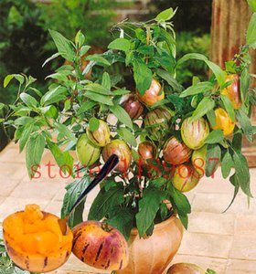 wholesale100 mini graines de melon sucré Melon Tree Non OGM-Organique Fruits et légumes plantsplant bonsaï