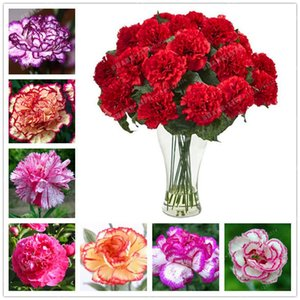 New Arrival! 100 Pieces Rare Carnations Seeds Bonsai Balcony Potted Plants Flowers Dianthus Caryophyllus Seeds for Home Garden